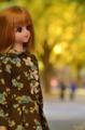 [doll][JeNnY]ラブジェニー@東大安田講堂前 2013-11-21