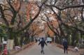 [東京]谷中霊園 2013-11-26