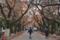 谷中霊園 2013-11-26