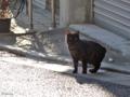 [猫]千駄木 2013-12-25