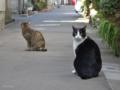 [猫]根津 2014-01-21