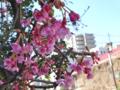 [花]2014-02-22
