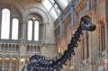 [ロンドン]自然史博物館 2011-12-06