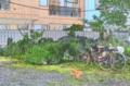 [東京][街角]根津 2011-05-25