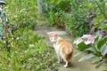 [猫]根津 2012-06-18