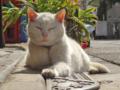 [猫]根津 2014-03-12
