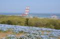 [花][クレーン]国営ひたち海浜公園 2014-04-26