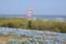 国営ひたち海浜公園 2014-04-26