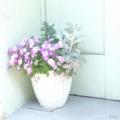 [花]2014-04-14 谷中