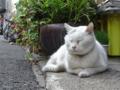 [猫]根津 たろちゃん 2014-04-25