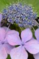 [花]2011-06-15