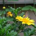 [花][昆虫]2014-07-09@根津