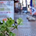 [東京][街角]2014-08-06@根津
