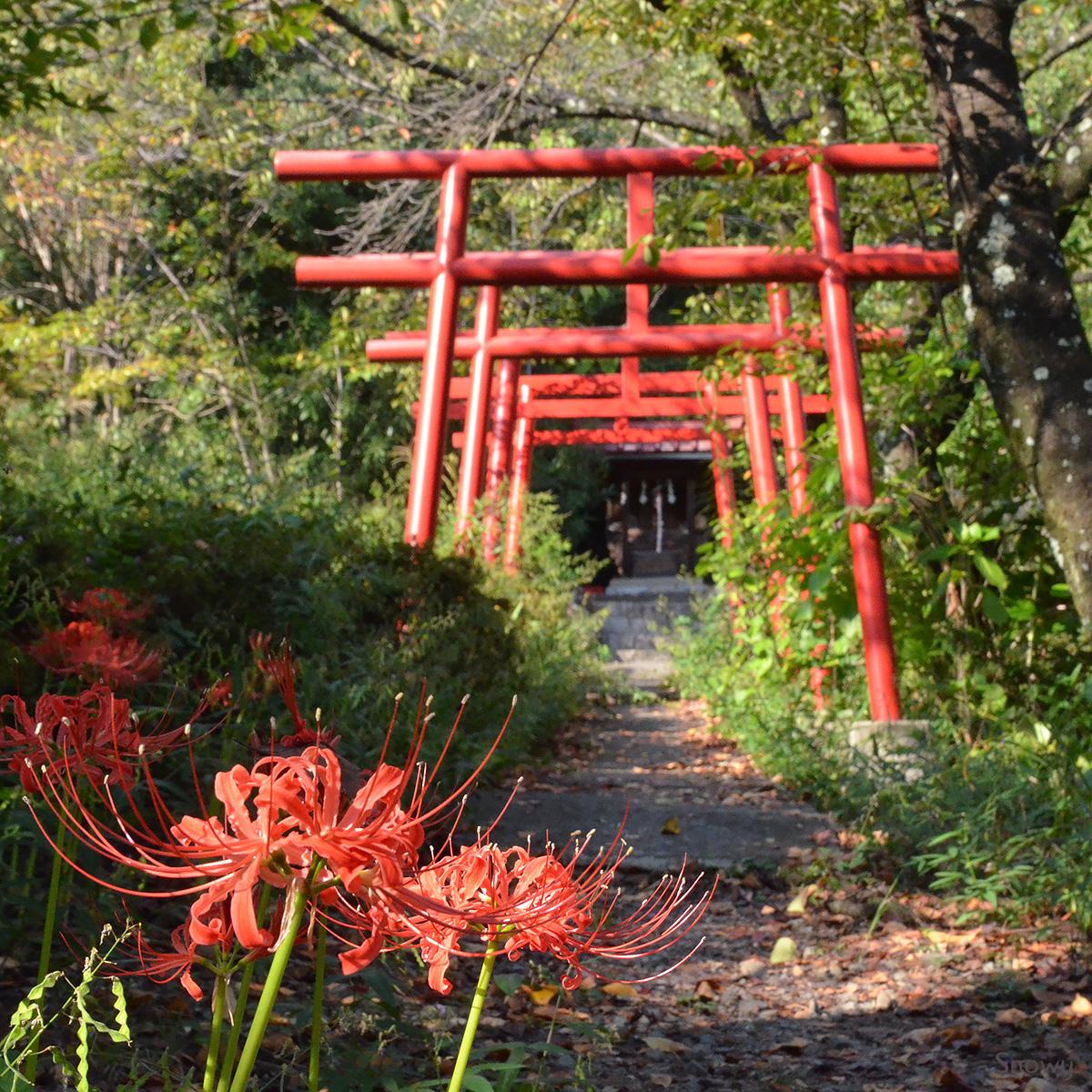 大善寺 2014-09-22