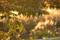 夕暮れの葉っぱ 2014-10-08@秋田市