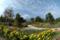 くじゅう花公園 2004-09-30