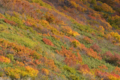 [秋田][紅葉]にかほ市鉾立展望台 2014-10-07