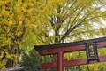 [東京][神社][谷根千]根津神社 2014-11-12