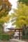 根津神社 2014-11-12