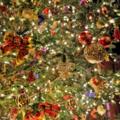 [クリスマス]ディズニーシー 2014-11-28