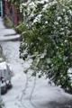 [雪]雪 2015-01-30