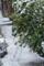 雪 2015-01-30