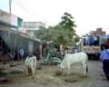 [インド]1995-10-22 ワーラーナシーからロバートガンジへ