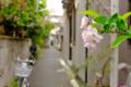 [東京][谷根千][桜][花][路地]谷中 2015-04-03