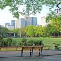 [東京][公園]日比谷公園 2015-04-23
