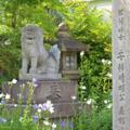 [京都][神社]晴明神社 2014-07-17