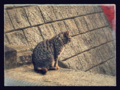 [猫]2017-02-25 愛宕神社にて