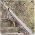 [猫]愛宕神社にて(2017-02-25)