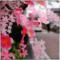 柳川 (2017-03-23)
