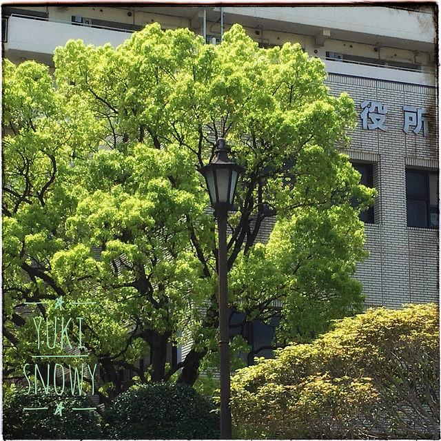 福岡西区役所 2017-04-19