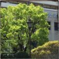 [街角]福岡西区役所 2017-04-19