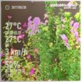 [Instaweather]2017-05-30
