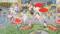 カグラと新郎の花嫁行列パレード