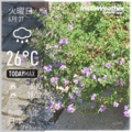 [Instaweather]2017-06-27