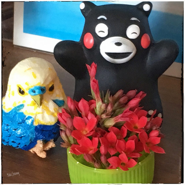 カランコエの花(2017-07-21)