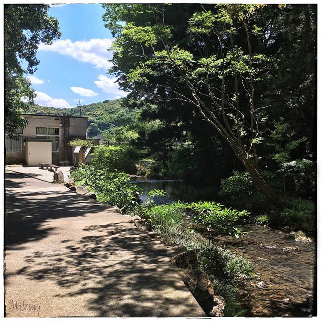 秋芳洞(2017-05-27)