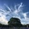 熊本城二の丸公園 (2017-09-02)