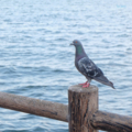 [鳥][福岡]愛宕浜海岸 (2017-08-18)