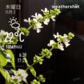 [Instaweather]2017-11-02