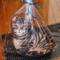 猫のドアストッパー(2017-11-03)