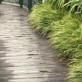 [雨]JR博多シティ屋上 つばめの杜ひろば 2017-11-29
