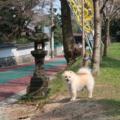 [福岡][神社][犬]飯盛神社にて(2018-03-25)
