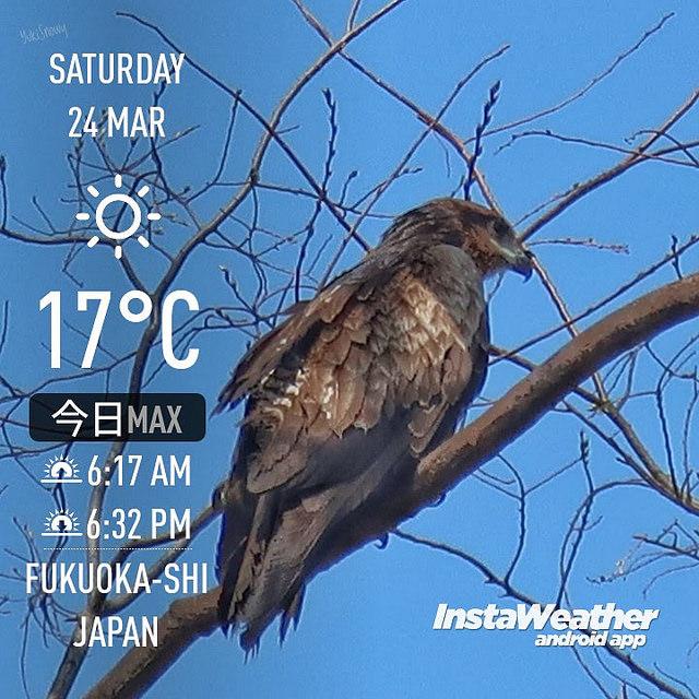 f:id:Snowowl:20180326104903j:image