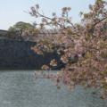 [福岡][桜]福岡城公園(2018-03-29)