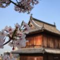 [花][桜][福岡]福岡城