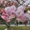 福岡城公園(2018-03-31)
